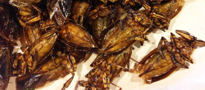 Jezení hmyzu v Thajsku